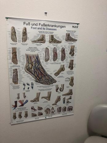 Bild Fuß und Fußerkrankungen