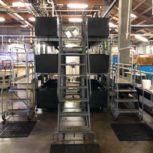 An Urchinomics test ranch facility at the UC Davis Bodega Marine Lab testing sea urchin
