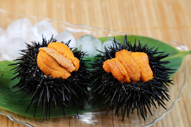 Sea Urchin gonad uni helping kelp forests