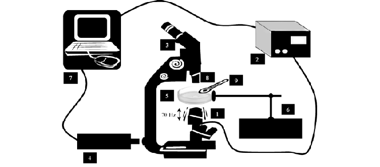 Acquisition System for Sperm 3D Imaging (3-Inverted Microscope, 4-High Speed Camera, 5-Imaging Chamber)