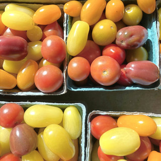 Tri Color Cherry Tomatoes