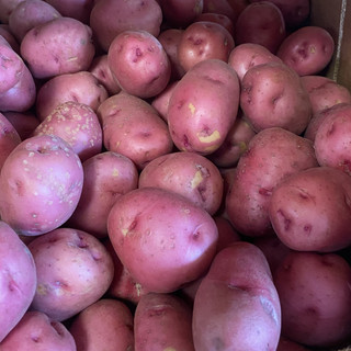 Large and Small Red Potatoes