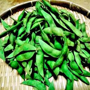 枝豆収穫販売開始