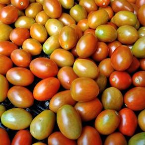 ミニトマト商品開発