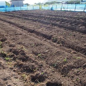 枝豆植え付け準備