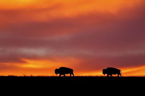 sunrise at Maxwell Wildlife Preserve in