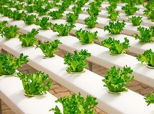 greenhouse-2139526_1920.jpg