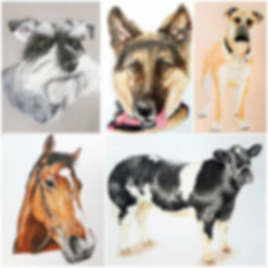 5 Pet portraits now revealed as they hav
