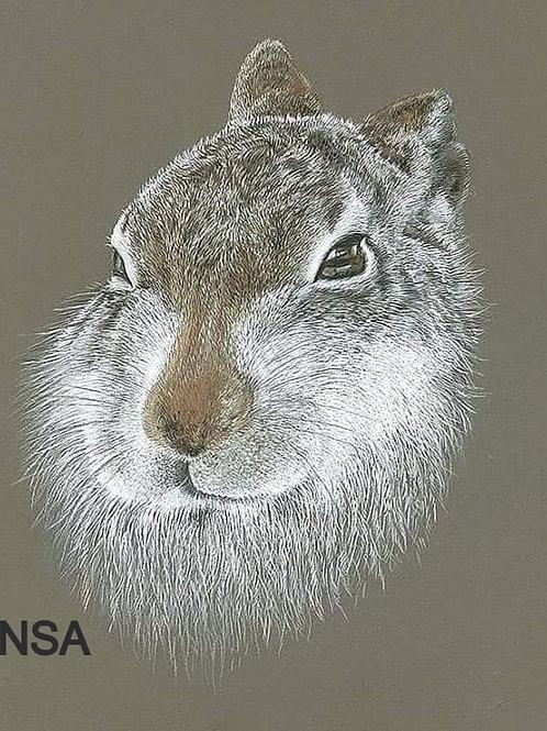Mountain Hare Print