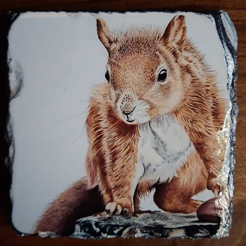Nutty the Squirrel Slate coaster