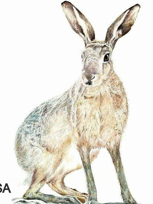Hazel the Hare Print