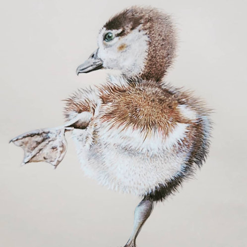 Duckling giclee print
