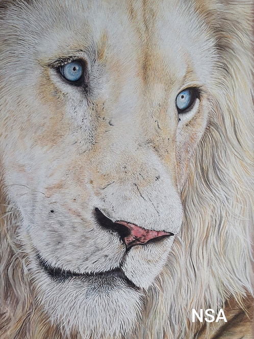 Timba Giclee signed print