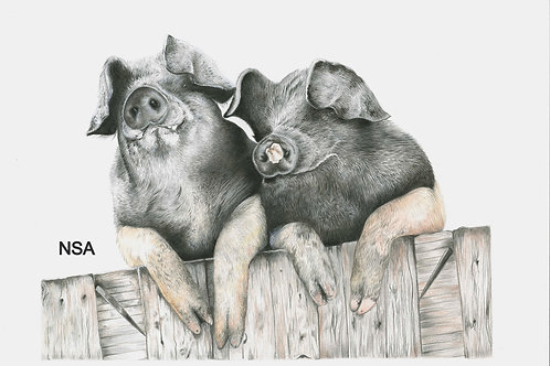Two pigs Print