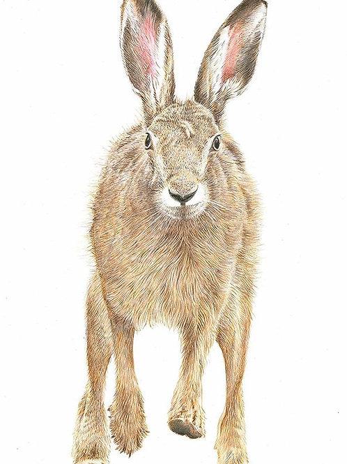 Running hare Print