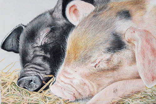 Sleeping pigs giclee print