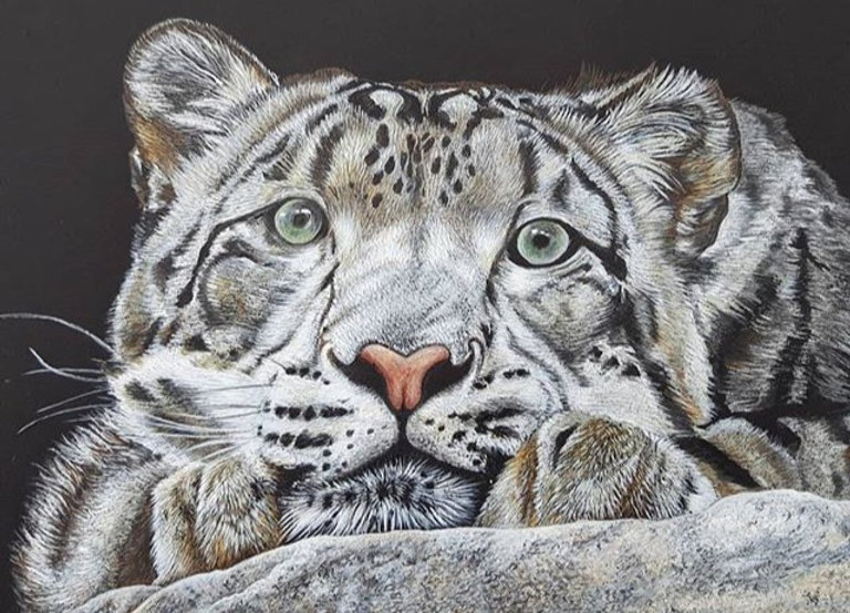 Look%20who%20got%20finished%20today..!!%0ASadly%20Snow%20Leopards%20are%20listed%20as%20vulnerable%2