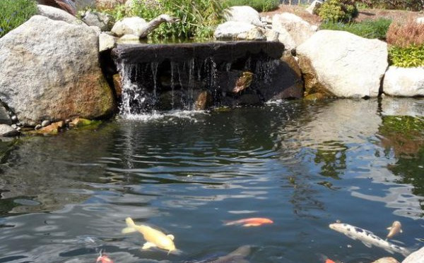 Pond-Designs-Pictures-5.jpg