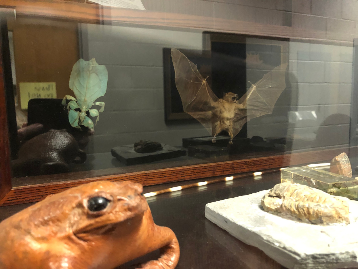 """Dead Animals"" Museum Case"
