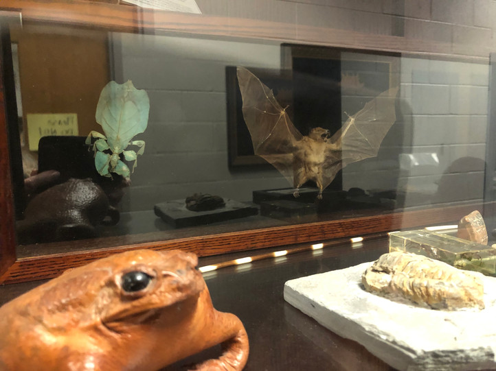 """""""Dead Animals"""" Museum Case"""
