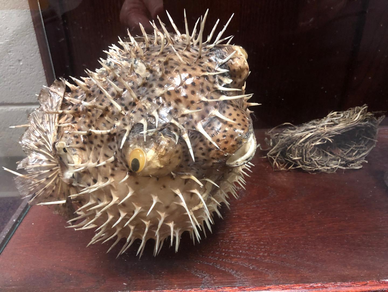 """Dead Animals"""" Museum Case"""