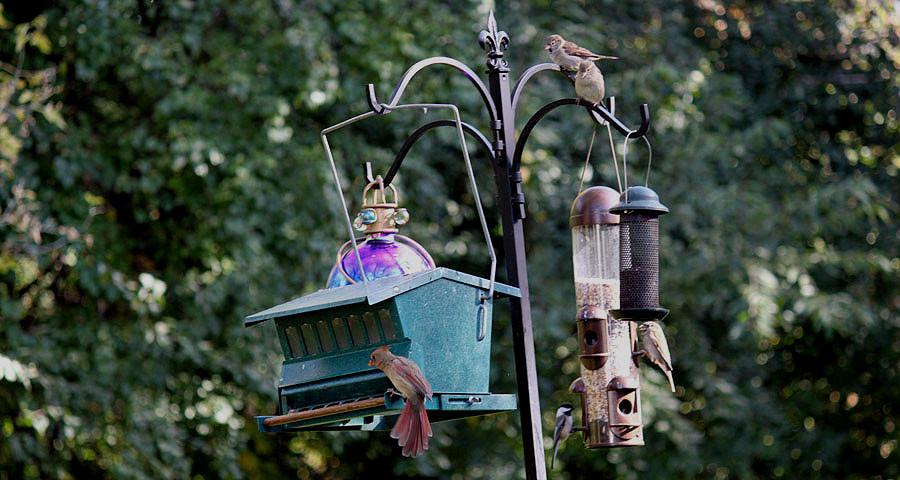 birds_at_feeder.jpg