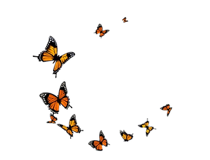 23-231372_flying-butterfly-png-transpare