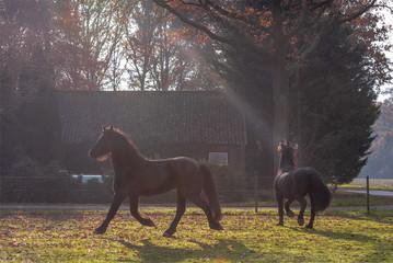 Niels-licht.jpg