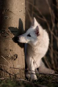 De-hondenfotograaf-locatieshoot