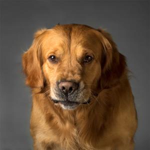 Human-Dog-Jones.jpg