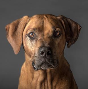 Human-Dog-Ziebo.jpg