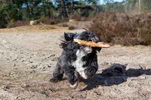 De Hondenfotograaf, locatieshoot Feya.jp