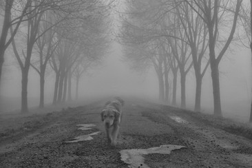 site-Jones-mist.jpg
