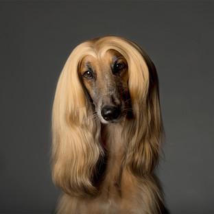 Human-Dog-Louie.jpg