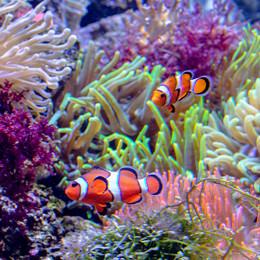 Date Sea Life -februari 2019