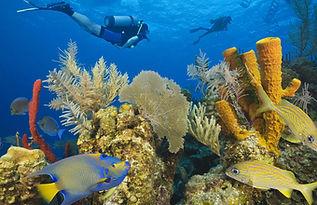 belize-coral-reef.jpg