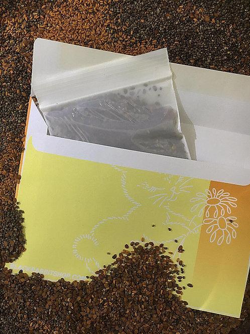 black rabbit wildflower seed mix - yellow + white