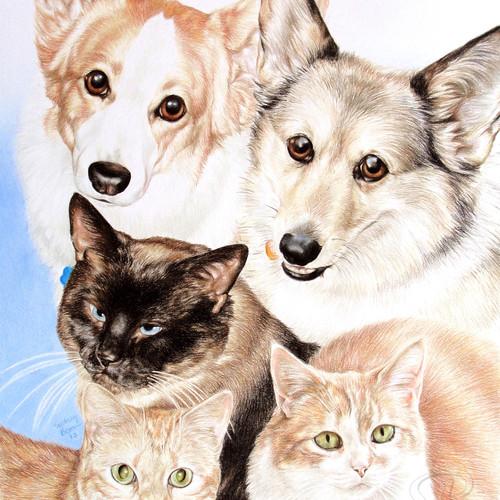 Pet Medley