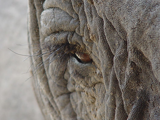 Looking an elephant in the eye is about as good as it gets!