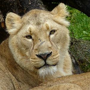 Foto Impressionen Zoo