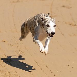 Hundetraining Kleindöttingen