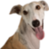 Windhund freigestellt1.png