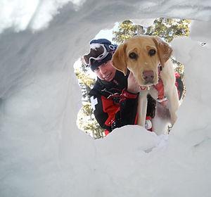 dog snow.jpg