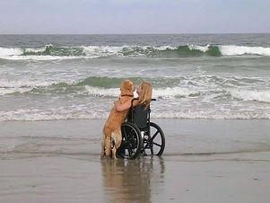 wheelchair dog.jpg