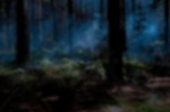 The Woods #1.jpg