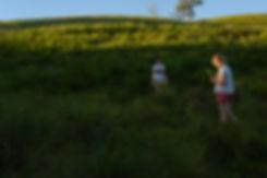rural, idyll, dream, Australia, youth, afternoon, farm