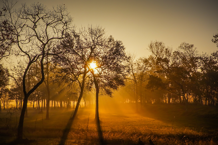 sunrise-trees-fog-canon 2.png