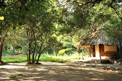 Jungle Bathhouse