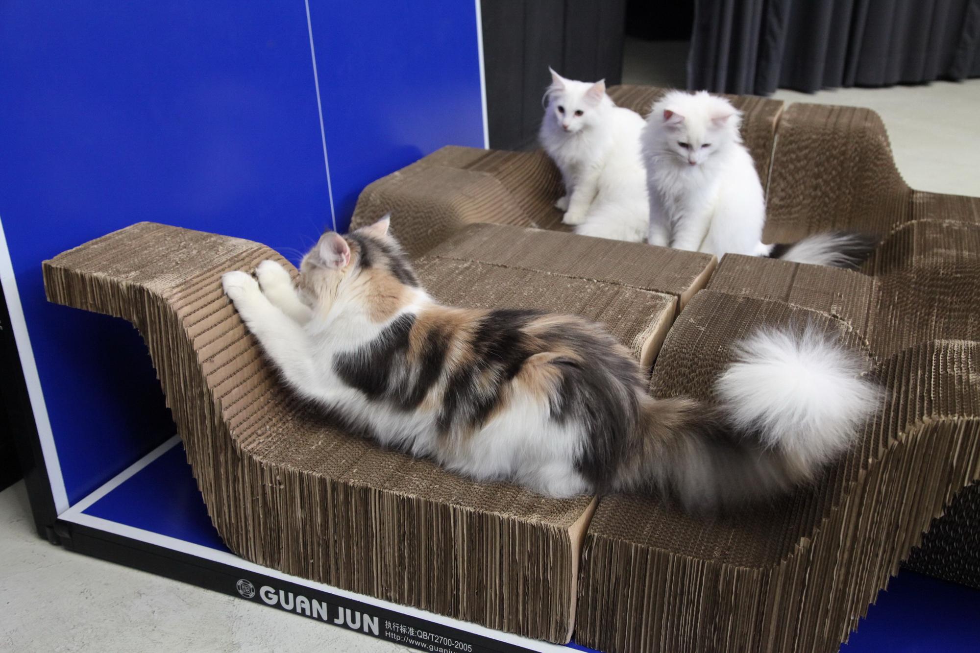10003_cat_09