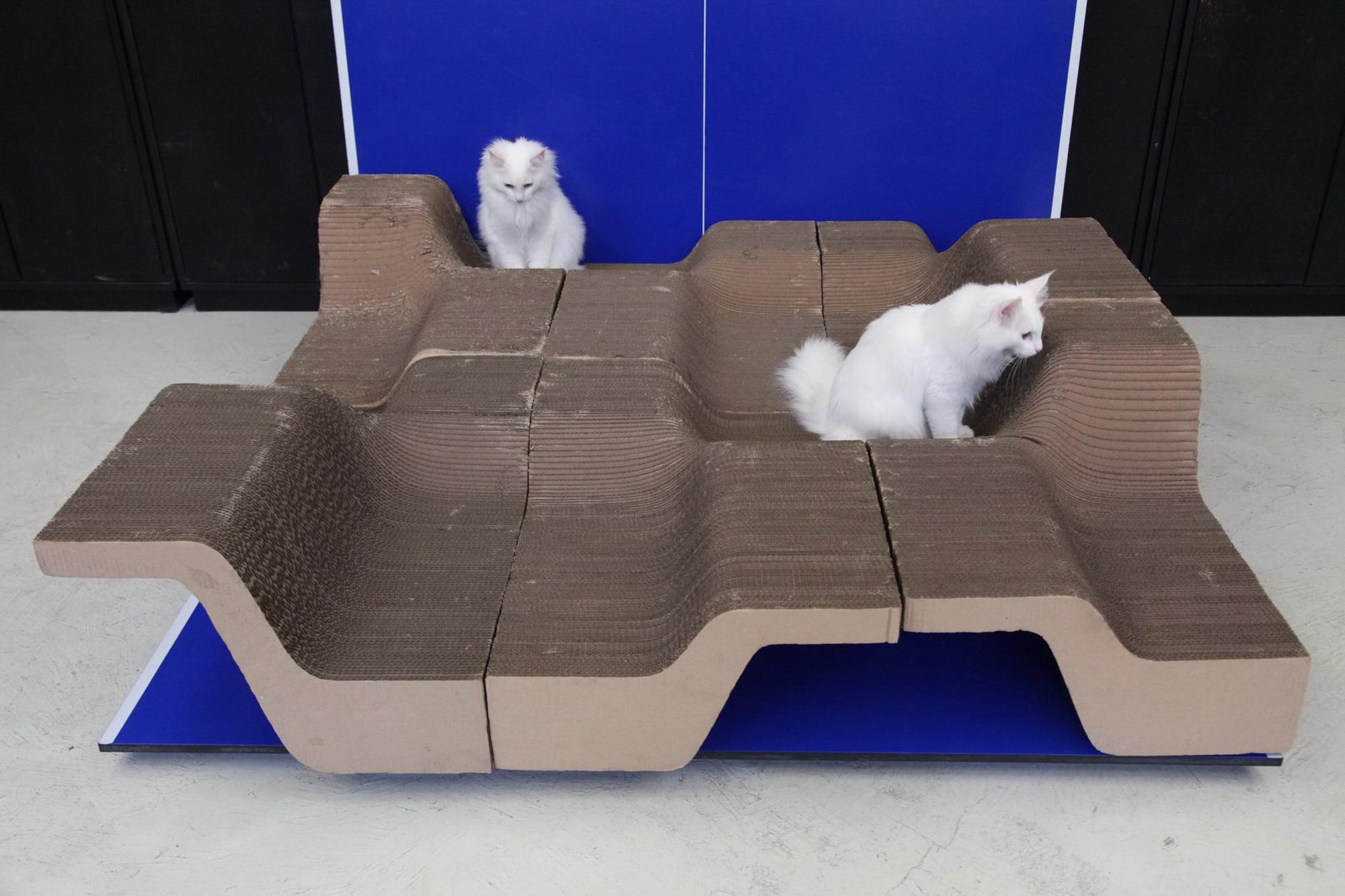 10003_cat_10